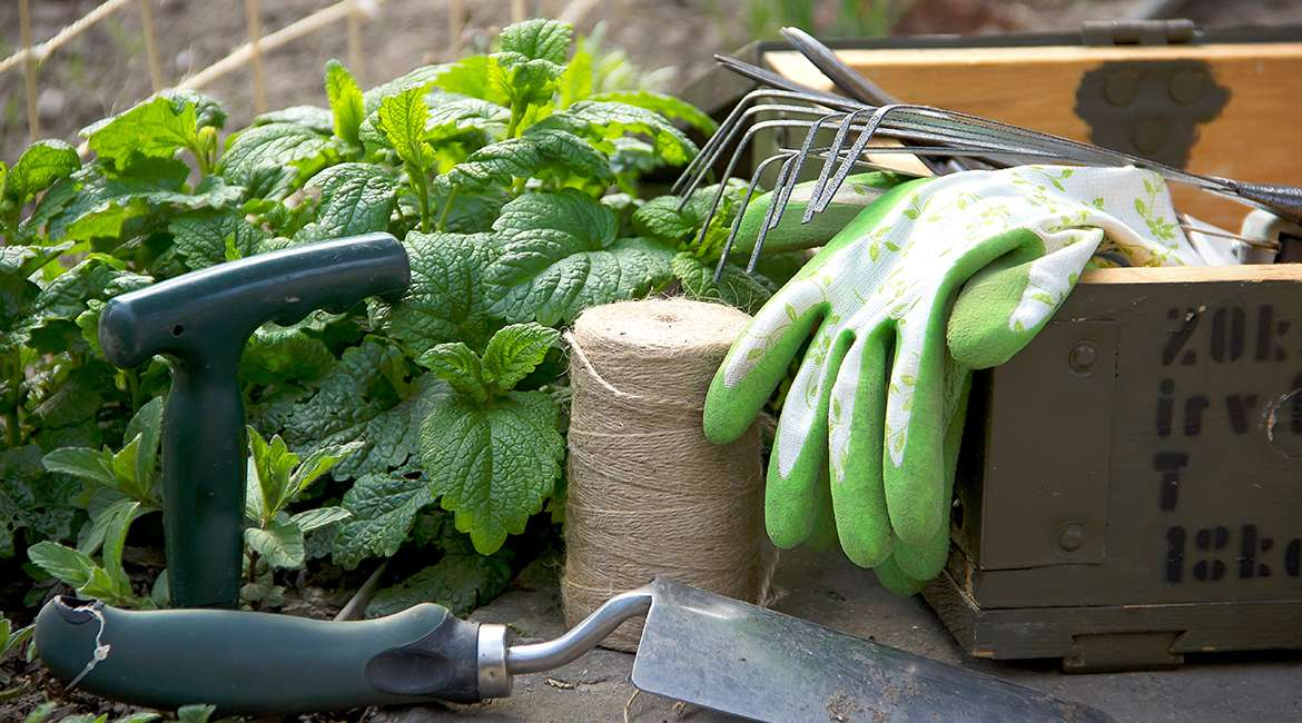 Top Eight Gardening Tips