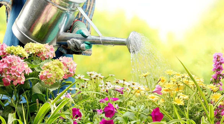 Experimental Gardening
