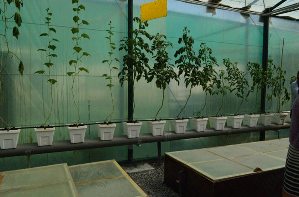 Nursery Plants Growth